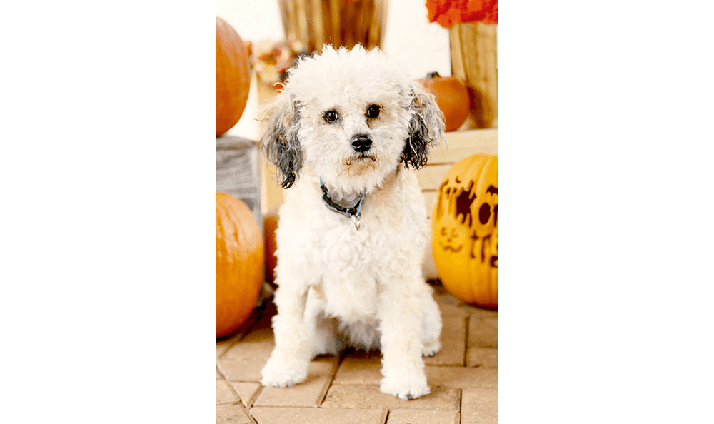 Pet dog next to pumpkins at Westchase Veterinary Center and Emergency