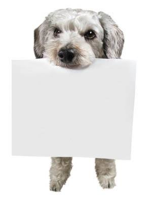 Pet dog holding docs at All Creatures Animal Clinic