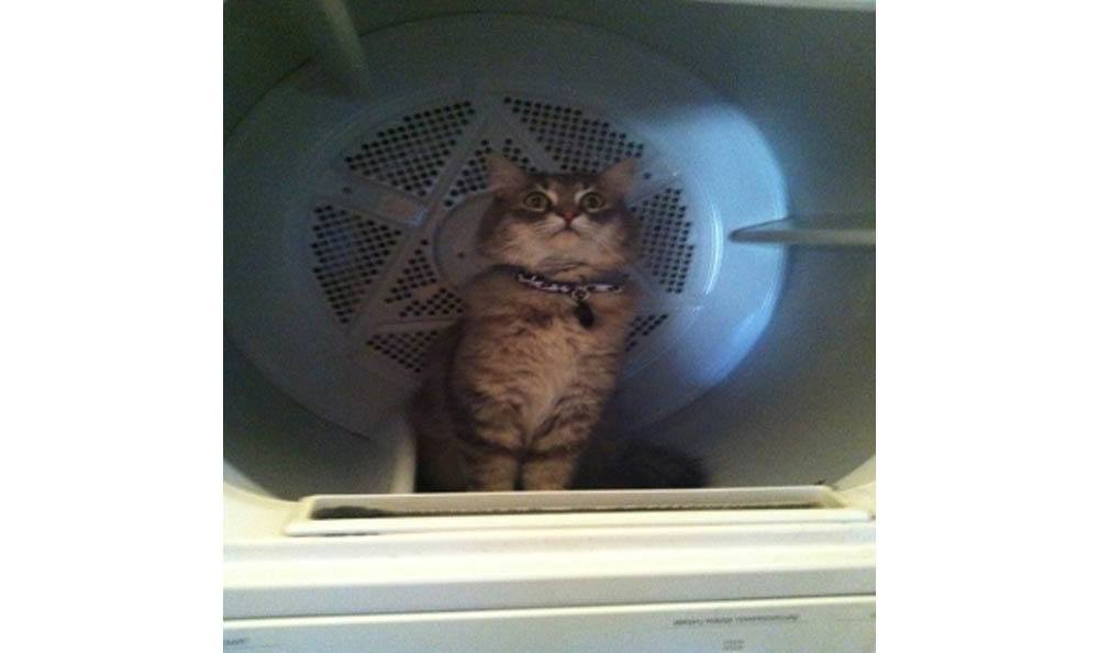 Weezy The Cat In A Dryer At All Creatures Animal Clinic