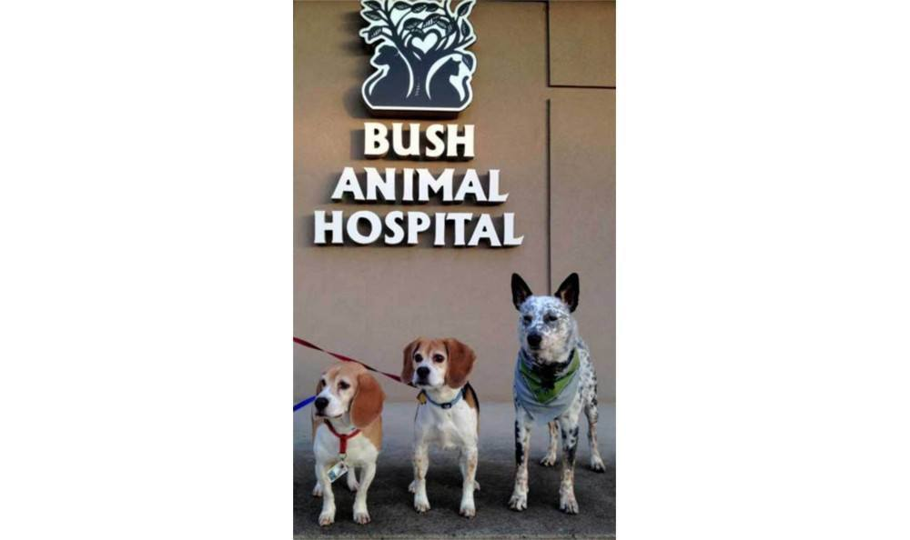 Happy customers at Bush Animal Hospital