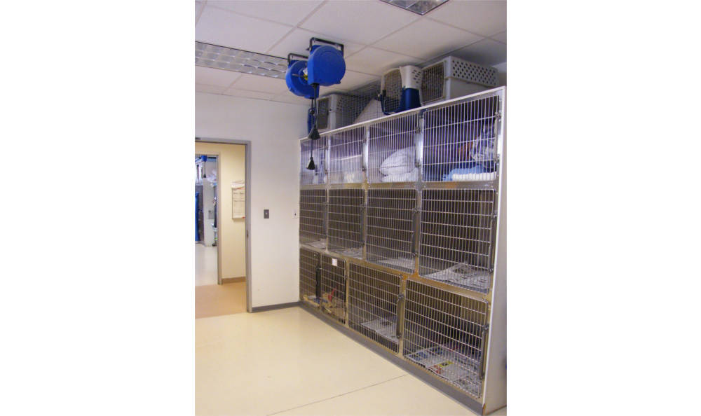 The dog ward area at Centralia Animal Hospital