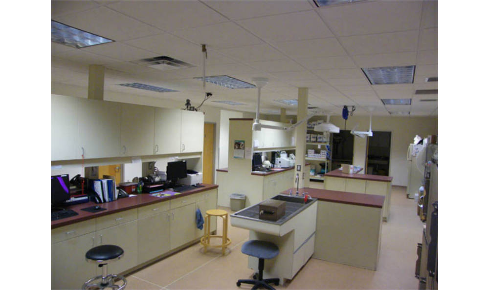 Treatment area at Chester Animal Hospital