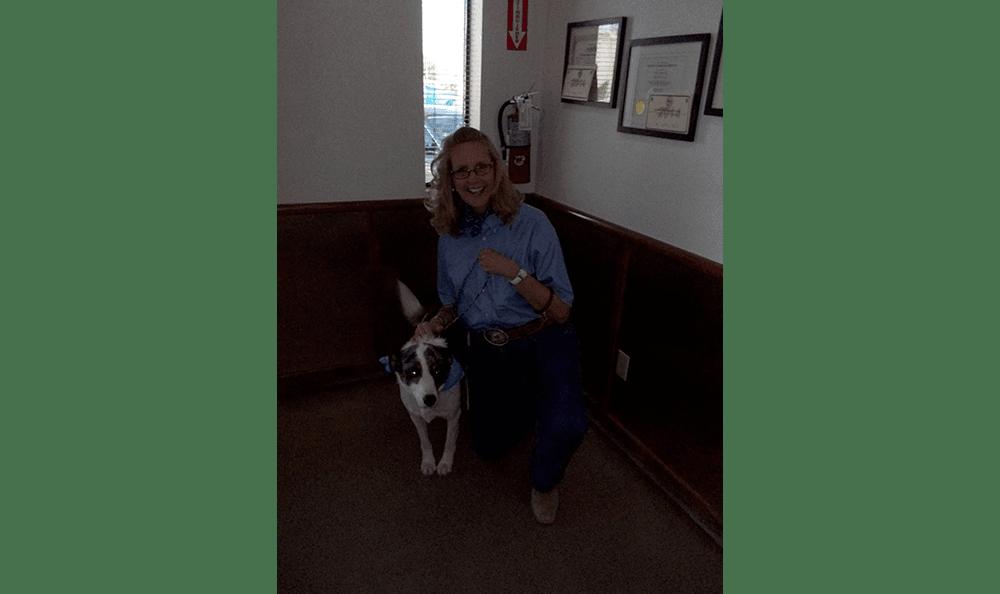 Pet in cowdog costume at College Garden Animal Hospital