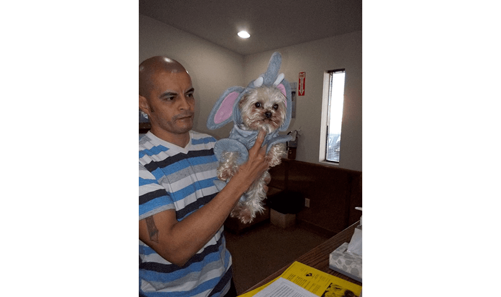 Pet in elephant costume at College Garden Animal Hospital