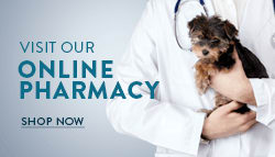 Coupons U0026 Specials. Animal Hospital In Roswell Are ...