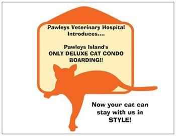 Cat condos at Pawleys Veterinary Hospital