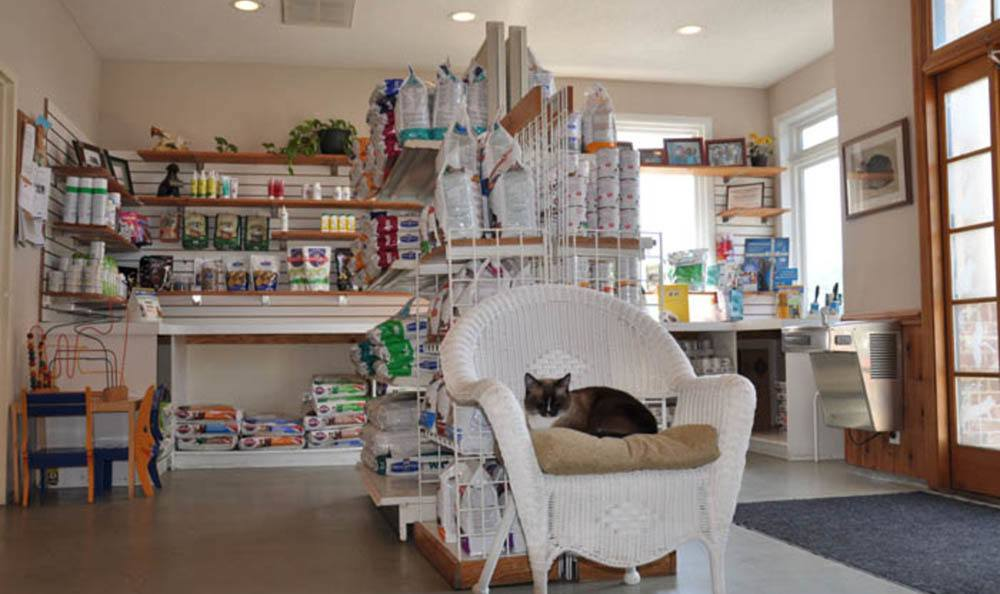 Cat Napping In Front Of Supplies At Pawleys Veterinary Hospital