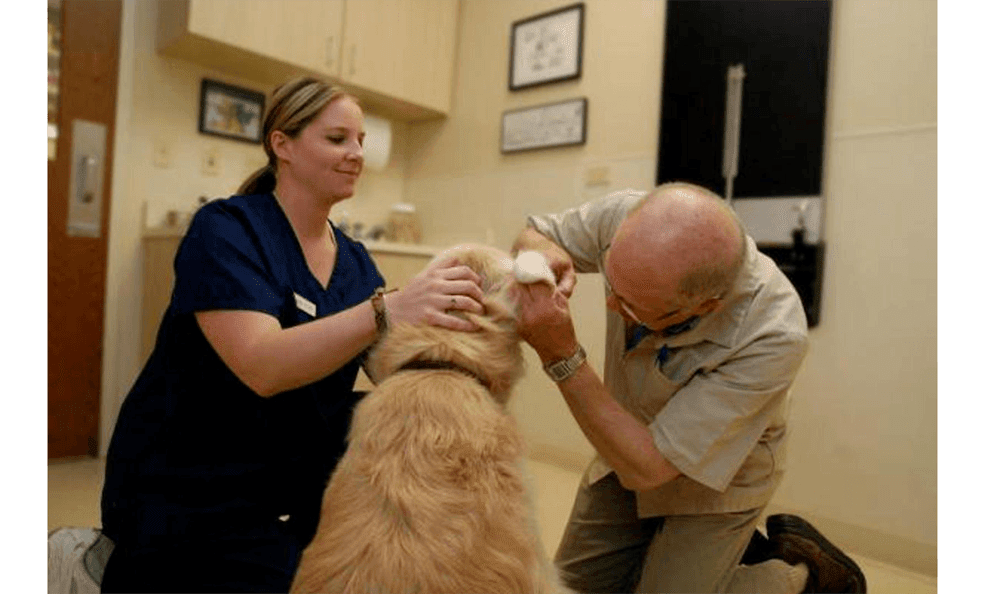 Doctor Examining A Dogs Ears