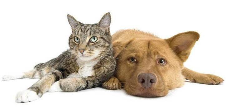 Life stage pet care at Mundelein Animal Hospital