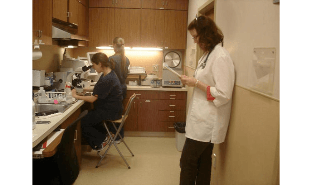 Staff In The Lab At Vet Clinic In Mundelein