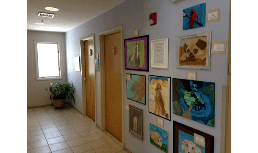 Danvers Animal Hospital Exam Room Entrance