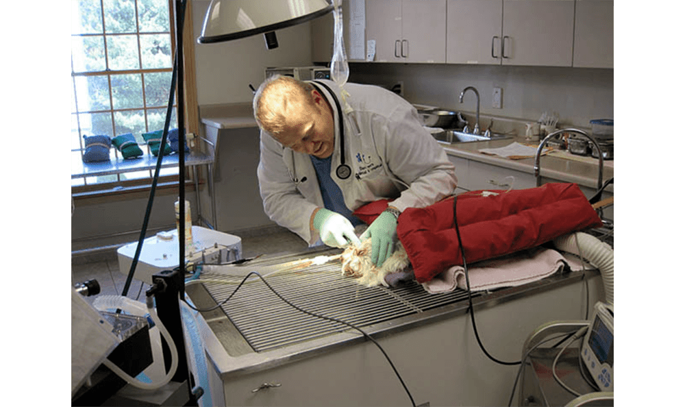 Dentistry At Danvers Animal Hospital