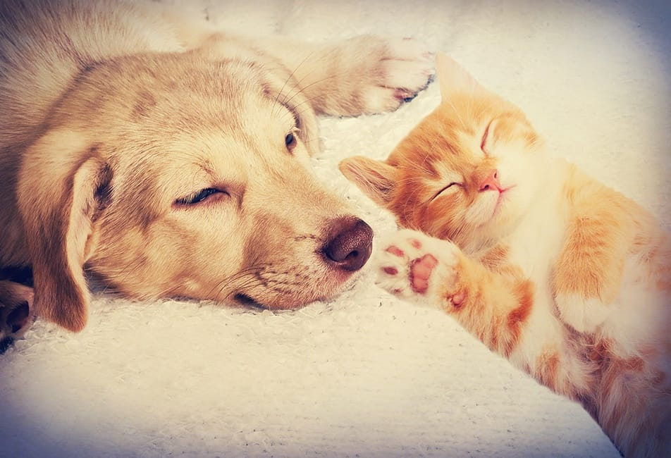 City Walk At Woodbury Loves Pets! We Welcome Your Furry Friends.