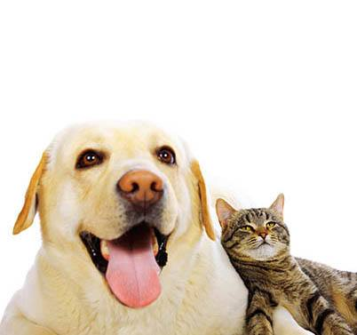 Your furry friends are welcome at Millstone of Noblesville