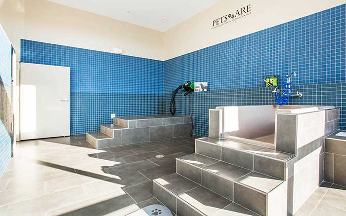 Dog spa at Marq Midtown 205 in Charlotte, NC