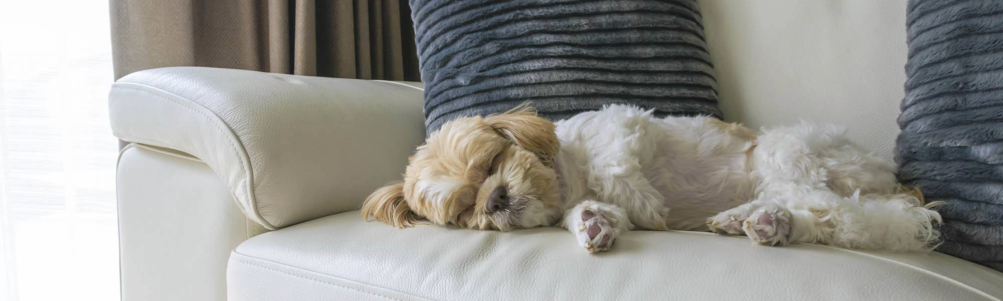 Pet friendly apartments in Stafford