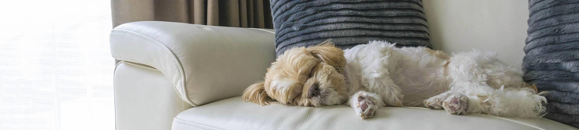 Pet friendly apartments in Elkton