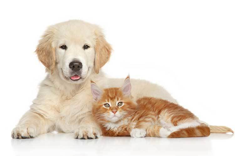 Cats and Dogs Welcome at Eagle Rock Apartments at Freehold