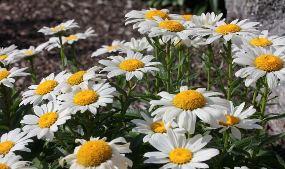 Beautiful flowers at Artis Senior Living communities
