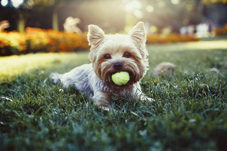 Our apartments in Woodbury are pet friendly at The Barrington