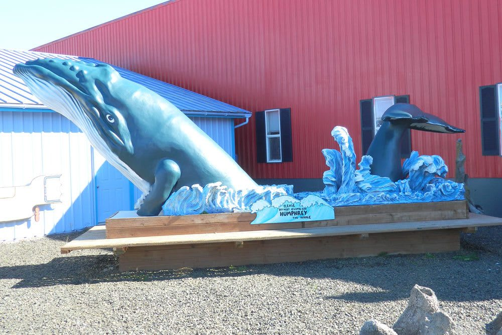 One of the landmarks of Aquarium Village is our sculpture of a whale