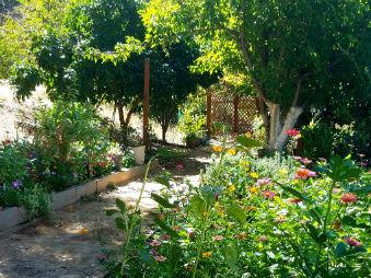 A wonderful community garden at .