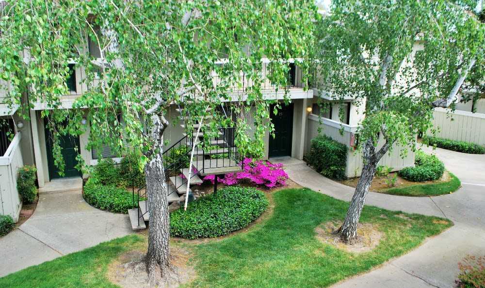 Landscaping At Our Apartments In Sacramento