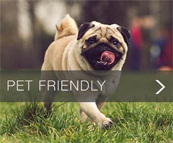 Pet Friendly apartments at Element at Stonebridge