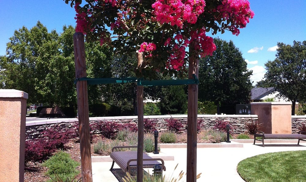 Plants, flowers, and other well-manicured vegetation abound at our senior living community here in Chico, CA