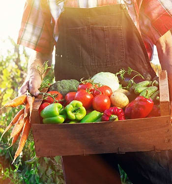 With Maplewood Senior Living's farm-to-table philosophy, our residents receive only farm-fresh ingredients in our delectable chef-prepared meals.