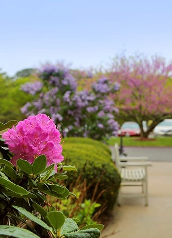 Learn more about the care options at Mayflower Place in West Yarmouth, Massachusetts.