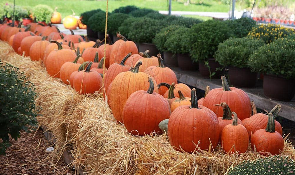There are plenty of events at Maplewood at Twinsburg to keep you or your loved one active and happy - for every season and occasion!