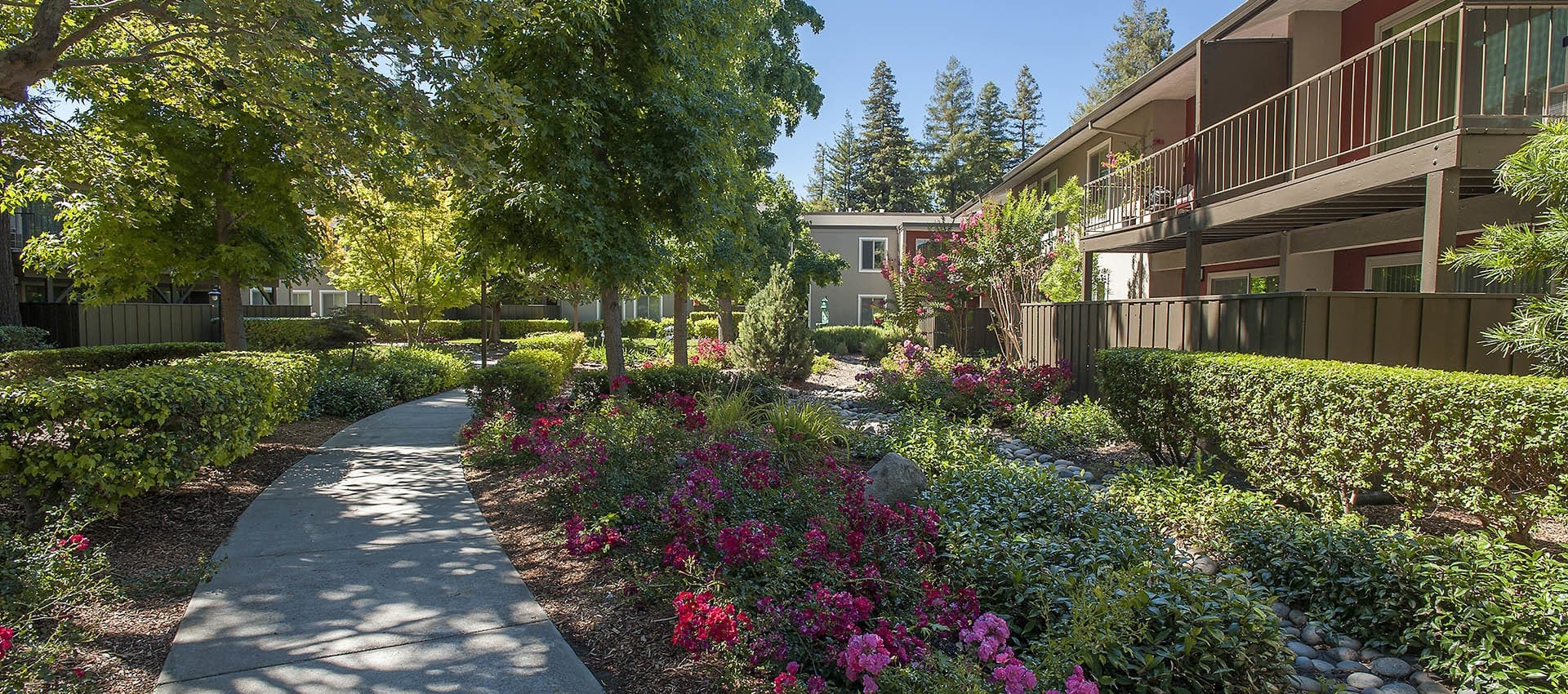 Brightly Colored Flowers at Flora Condominium Rentals in Walnut Creek, California