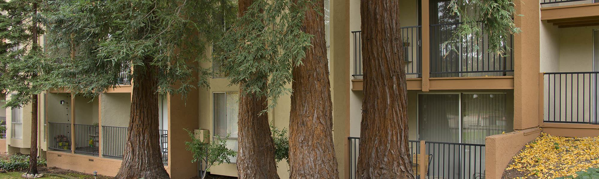 Learn about our neighborhood at Trinity House Apartment Homes in Walnut Creek, CA on our website