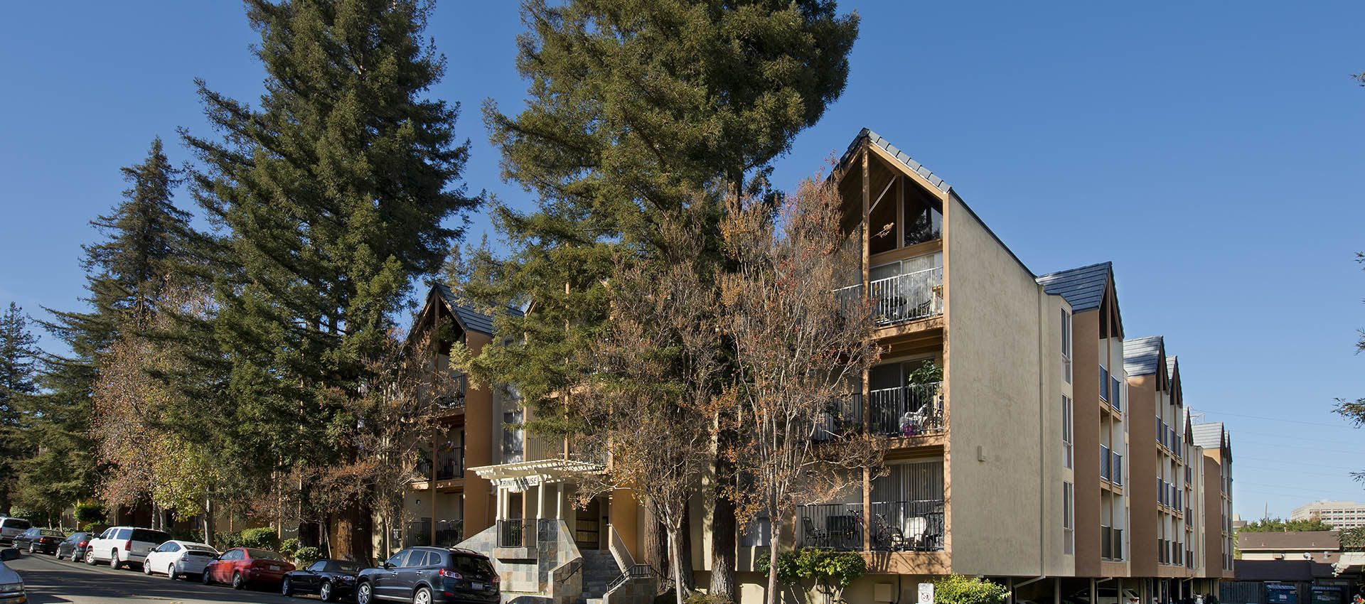 Resident buildings amid mature trees at Atrium Downtown in Walnut Creek, California