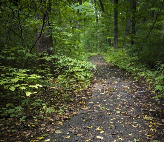 Wooded trail at Diamond Forest Apartments in Farmington Hills.