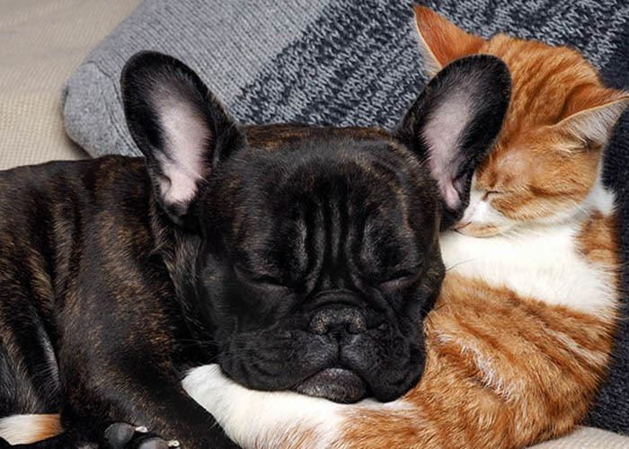 Cat and dog snuggling at Tamarack Apartments in Santa Clara