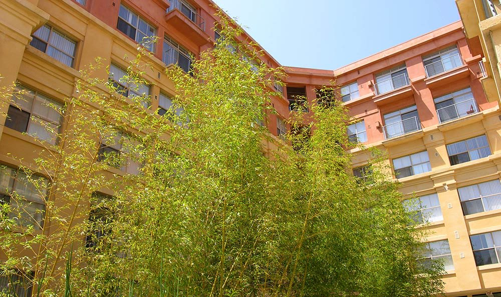 Courtyard with lush vegetation at 1010 Pacific Apartments