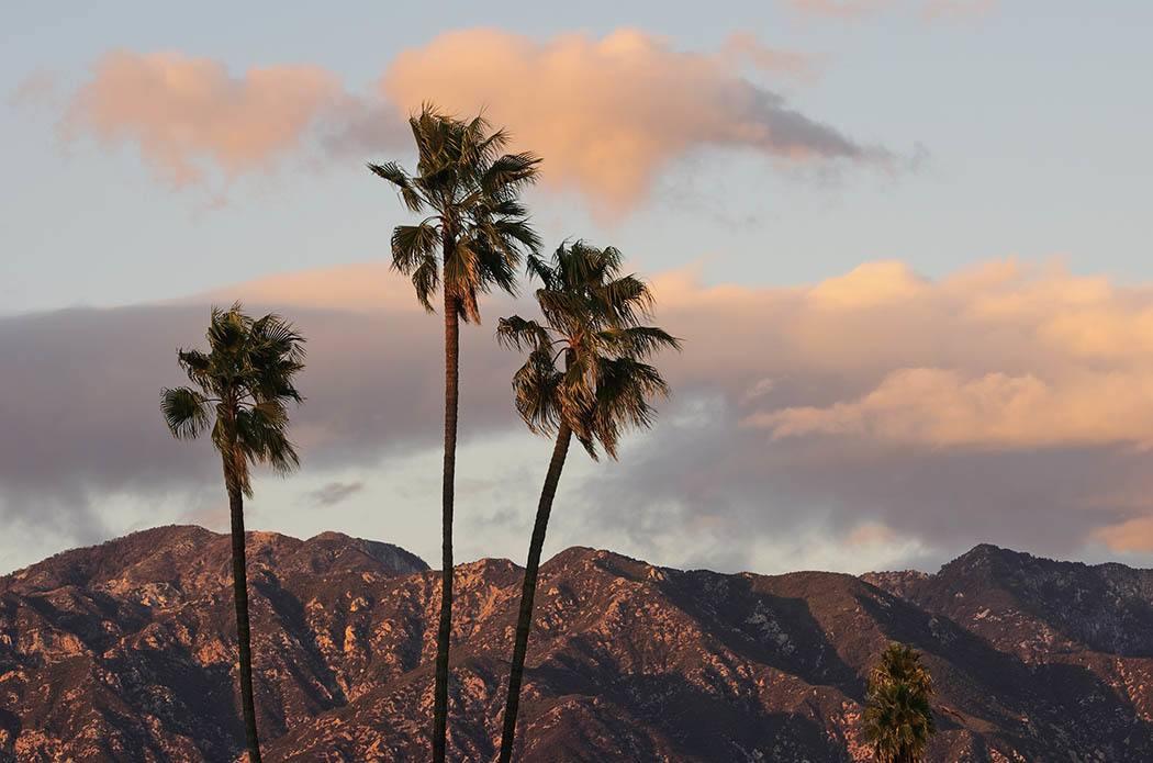 Palm trees at The Terraces at Park Marino in Pasadena