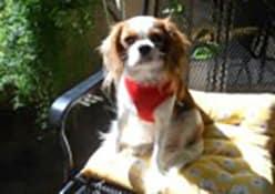 Resident pet, Madeleine Precious Rose