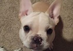 Resident pet, Bruno