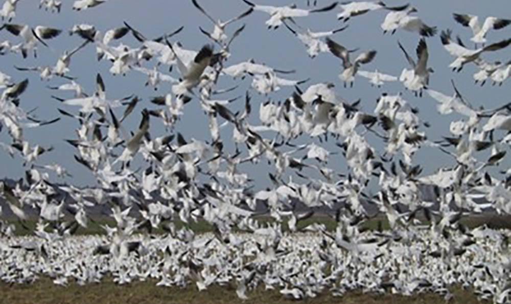 Birds taking flight near Cap Sante Court Retirement Community
