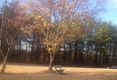Beautiful fall foliage around the property at Highland Square in Greenville.