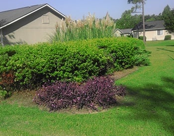 The landscaping and trees throughout our apartment community here at Pinehaven Villas are very well maintained.