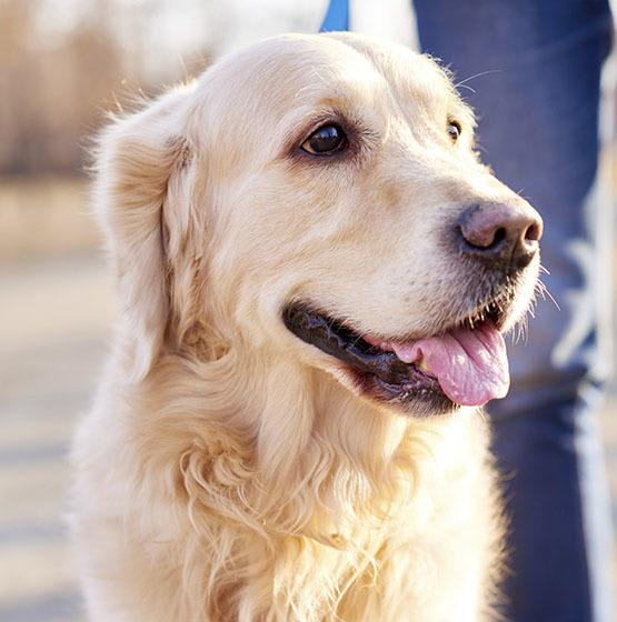 Pets are welcome at White Cliff Apartments
