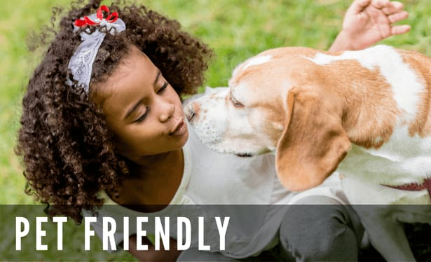 Pet friendly at the apartments for rent in Frisco