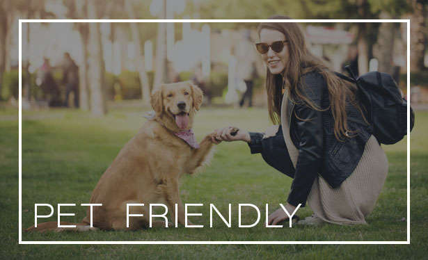 Pet friendly at the apartments for rent in Renton