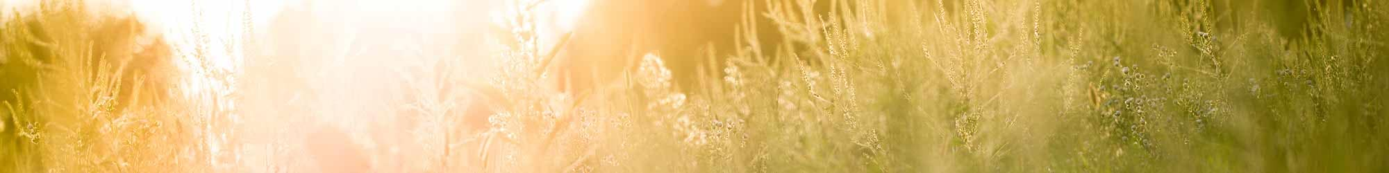 Learn about how Waltonwood enriches residents' lives