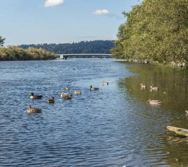 Senior living in Renton has a river nearby