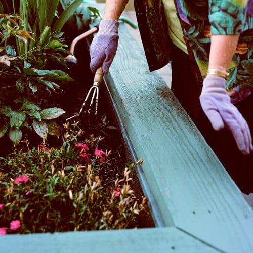Create a garden at Merrill Gardens at Ballard